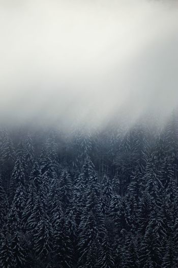 Travel Destinations Travel Eyem Best Shots Nature Beauty In Nature EyeEm Best Shots EyeEm Nature Lover No People EyeEm Winter Mountain Tree Snow Cold Temperature Winter Forest Fog Backgrounds Weather Sky Landscape Pine Woodland WoodLand My Best Photo