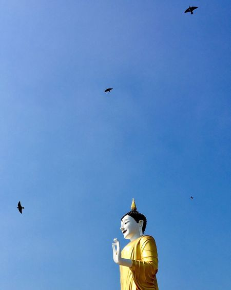 Wat Phra That Doi Kham Bird Birds Flying Sky Statue Peaceful View Outdoors Travel Trip Buddhist Buddhist Temple Buddhist Statue Buddhaimage Watphrathatdoikham Phrathatdoikhamtemple Chiangmai Thailandtravel Thailand Religion Peaceful