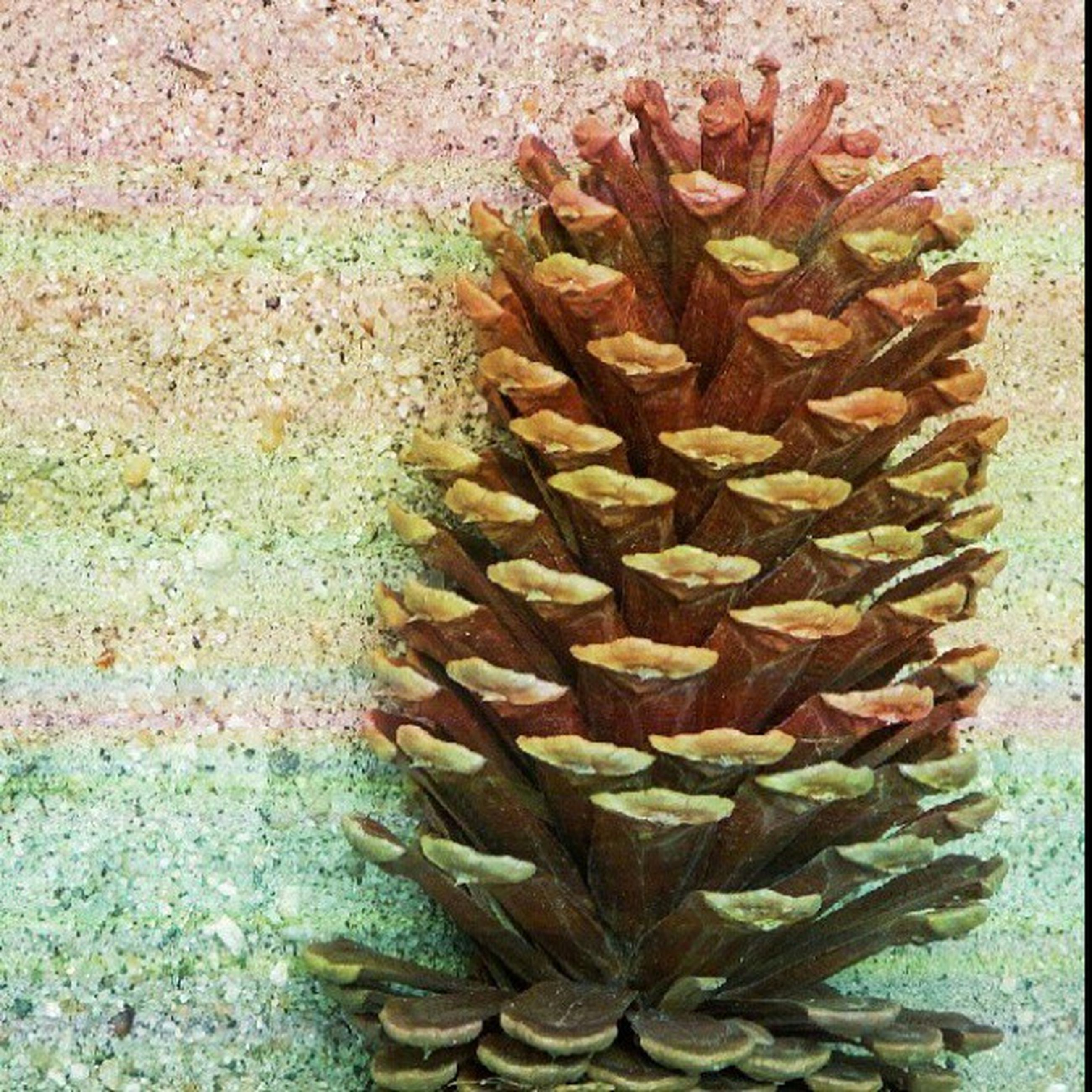 high angle view, close-up, still life, textured, large group of objects, cactus, leaf, abundance, pattern, nature, dry, stack, freshness, growth, no people, natural pattern, pine cone, directly above, day, plant