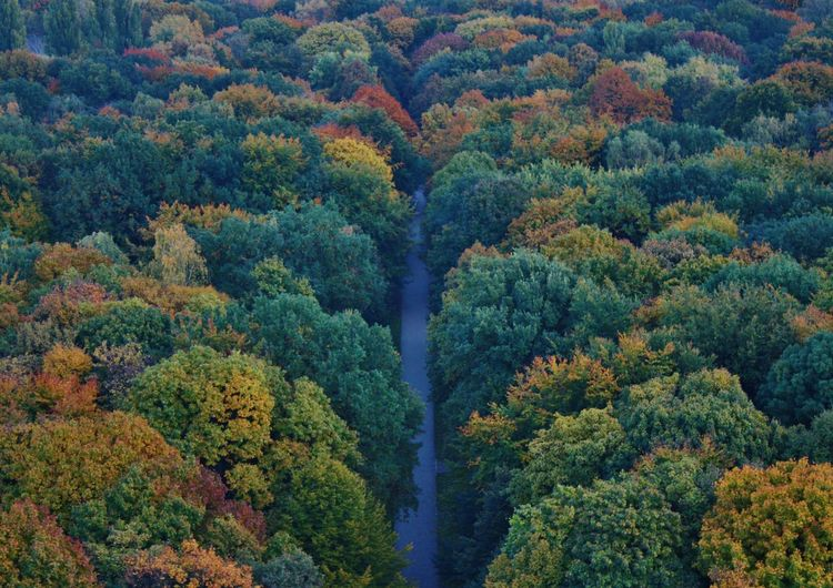 High Angle View Of Trees Growing At Tiergarten During Autumn