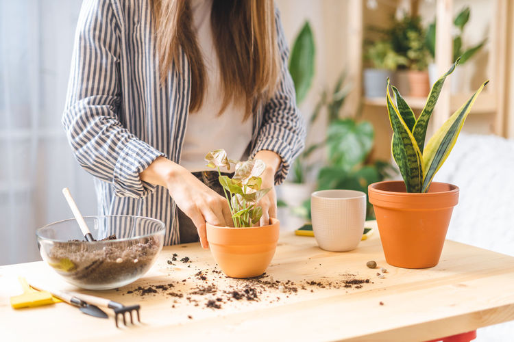 Midsection of woman standing by potted plant on table