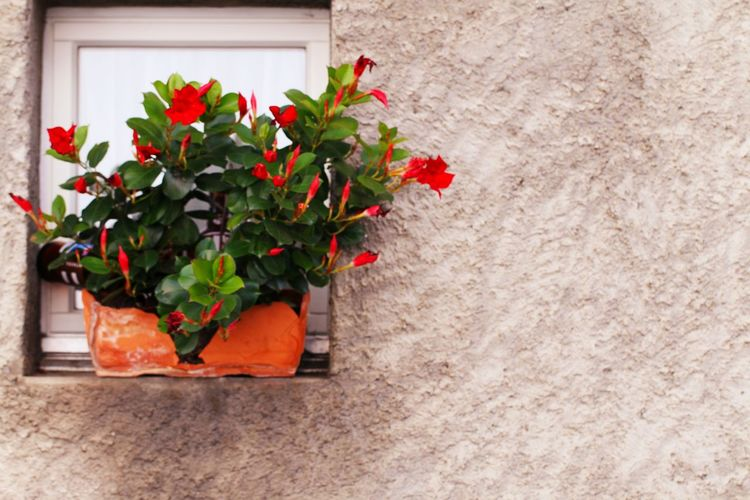 Red flower pot against wall