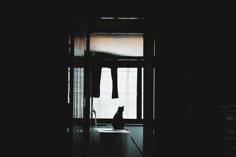 晚安世界 等待一個人,是個怎麼樣的情緒。 望得頸都長腿都酸了,心跳加速後肚子也咕咕地叫了。 直到她出現了,這些牽掛和情緒狀態莫名其妙的消失了,心也安了。 229,貓咪的後窗。 總有一個值得你一直在等待的人事物。 There is always something you're waiting, and it's the one you love. Vscocam Cat Waiting Mood Xhinmania Photooftheday 229 Goodnight Lookingforlove Instadaily Followme EyeEm Best Shots The Week Of Eyeem Catoftheday Cats 🐱 Cat Watching Taipei,Taiwan Everything In Its Place