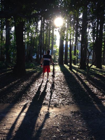 Rear View Of Person With Bike And Sun Shining Through Trees In Forest