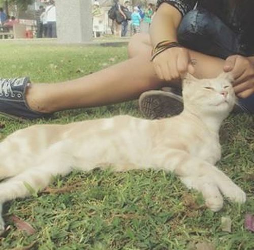 Catlovers Miraflores Lima Park City Street Taking Photos Relaxing Animals That's Me New First Eyeem Photo