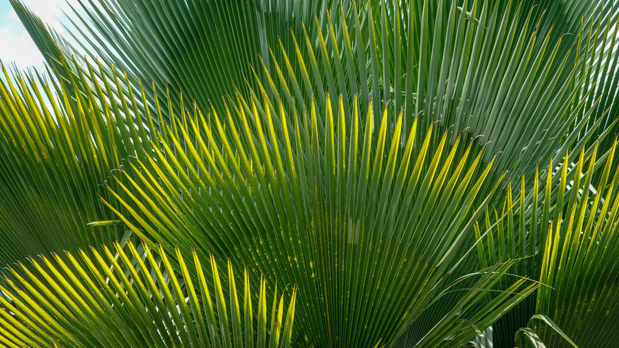 Green Color Palm Tree Leaf Plant Palm Leaf Growth Plant Part Nature Beauty In Nature Tropical Climate Close-up Tree Backgrounds No People Freshness Frond Outdoors Day Environment Full Frame Rainforest Leaves Tropical Rainforest