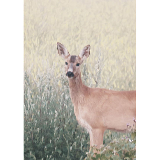 Not Sharp But Cute :)  Zoomeffect Nature Photography Beauty In Nature Pastel Colors Animals In The Wild Deer Young Animal