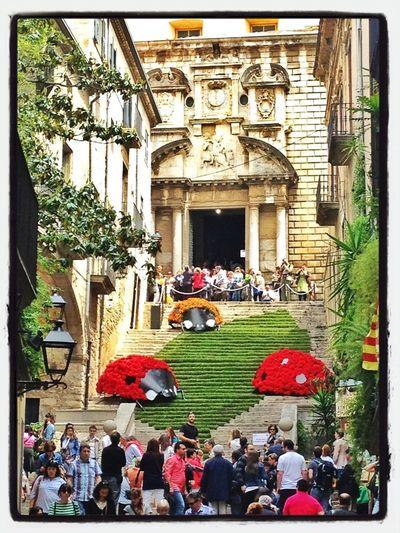 Ladybug & Stairs #tempsdeflors #tiempodeflores #girona #spring #primavera