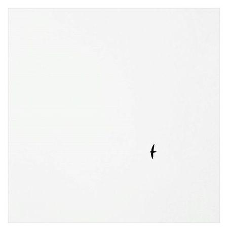 Flyin' solo Mobilephotography Blackandwhite Bw Nature Bird Sky Minimalism Minimalist Simple Live Fly Alone Photography Photooftheday Photoo VSCO Vscocam