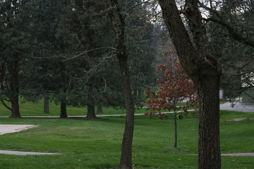 Trees Canon Rebel Xsi Raleigh Hills Oregon Nature