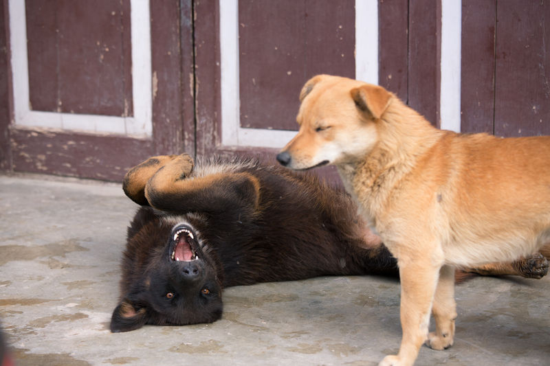 Oh my Boss Animal Themes Animal Wildlife Animals In The Wild Black Cute Day Dog Dog Love Dogs Dogslife Domestic Animals Happiness India Mammal Nature No People Open Mouth Outdoors Pets Sikkim Stray Animal