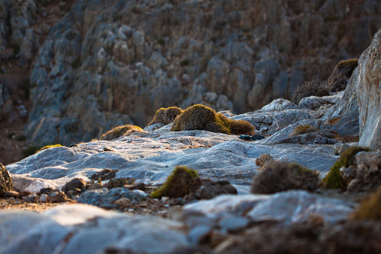 Rocks and bushes at a gorge in southern Crete. Evening Light Gorge Nature Nature Photography Rock Formation Bush Canyon Day Evening Land Nature Nature_collection Naturelovers No People Outdoors Pebble Rock Rock - Object Rocks Selective Focus Solid Stone Stones Surface Level Textured