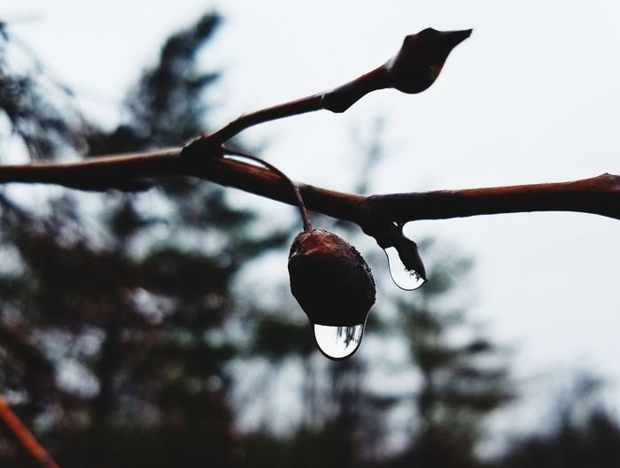 Close-up of raindrops on branch against sky
