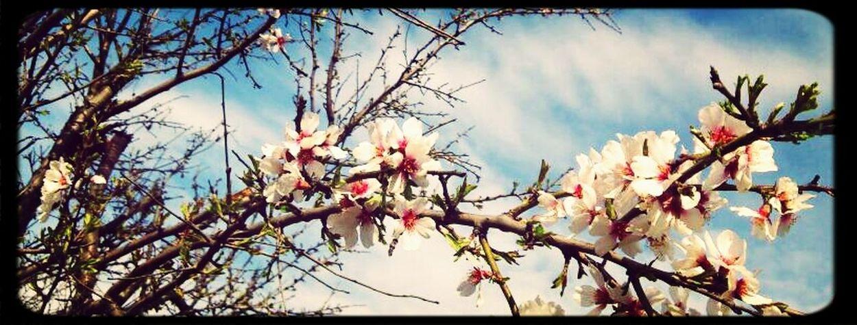 Flower Spring :)