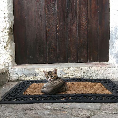 Mini meow