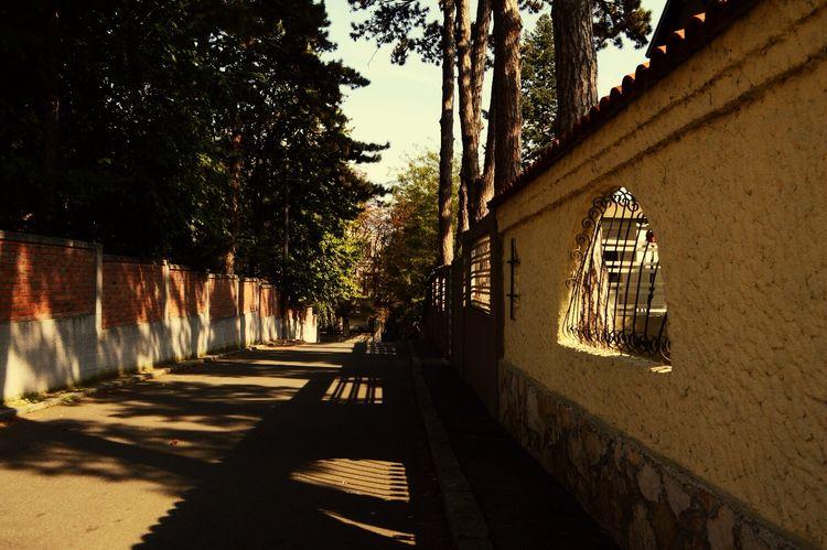 Belgrade Streetphotography Wphotography Belgradestreets Architecture Nature Trees EyeEm Best Shots