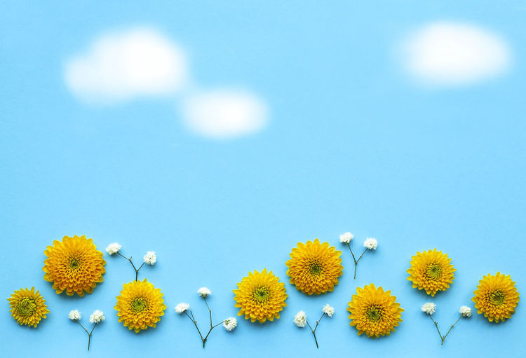Close-up of yellow flowers over blue background