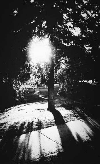 Andrography TreePorn Phoneography Lomography Shadowporn Graphyography