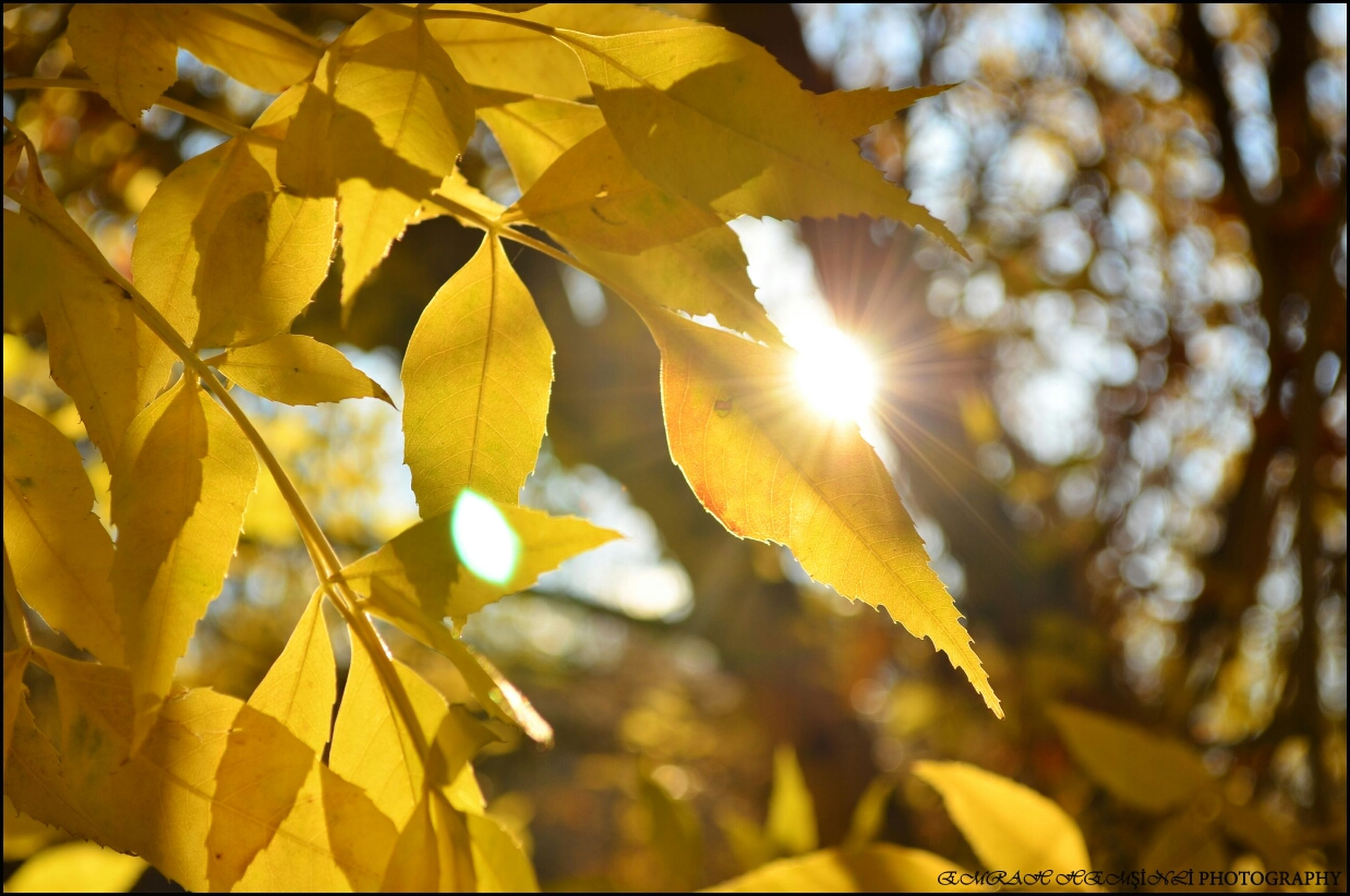 yellow, growth, sunlight, leaf, nature, sun, branch, focus on foreground, tree, beauty in nature, close-up, sunbeam, tranquility, low angle view, outdoors, lens flare, no people, selective focus, season, day