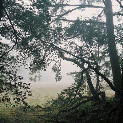 We go to the hidden place. Mounttamalpais Mounttam Marin Cataractcreek california hiking
