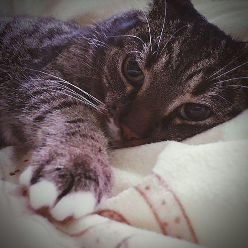 One Animal Animal Themes Cat Animal Mammal Feline Pets
