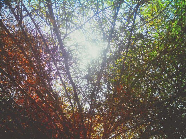 Beautiful Nature Peeping Sun