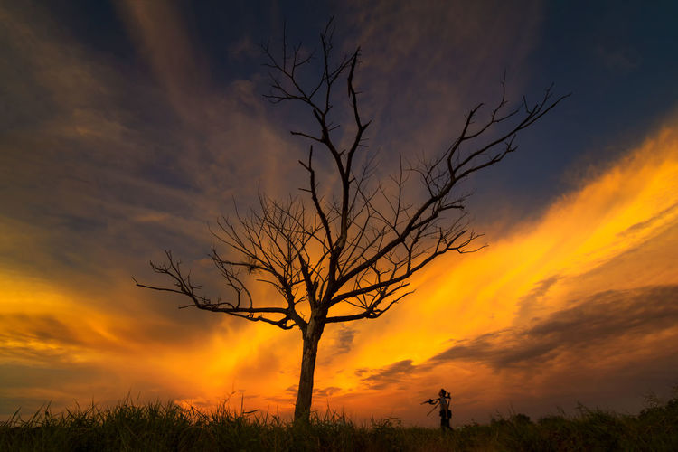 tree in field sunset backgroundform Thailand Sunset Sky Cloud - Sky Beauty In Nature Tree Scenics - Nature Orange Color Silhouette Bare Tree Plant Tranquil Scene Tranquility Non-urban Scene Land Idyllic Branch No People Nature Field Environment Outdoors Isolated