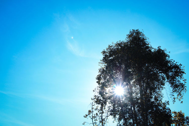 Sun star with half silhouette tree over bright blue sky Silhouette Sun Star Beauty In Nature Blue Clear Sky Day Growth Low Angle View Nature No People Outdoors Scenics Sky Star Shape Sun Sun Star Effect Sunlight Tranquility Tree