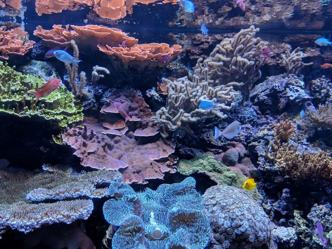 the reef UnderSea Sea Life Underwater Water Coral Backgrounds Full Frame Sea Close-up