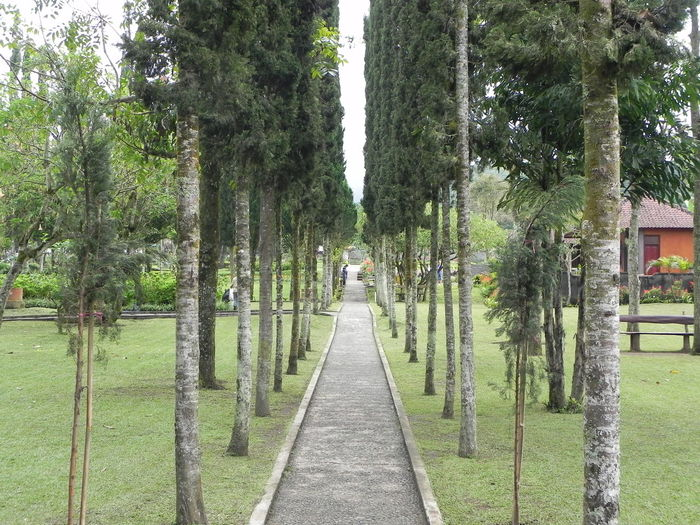 Empty path amidst trees at garden