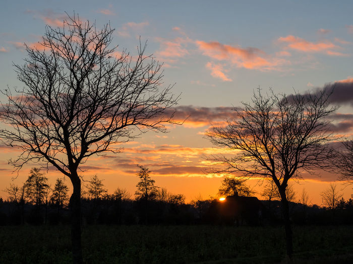 Silhouette of bare trees on field against orange sky