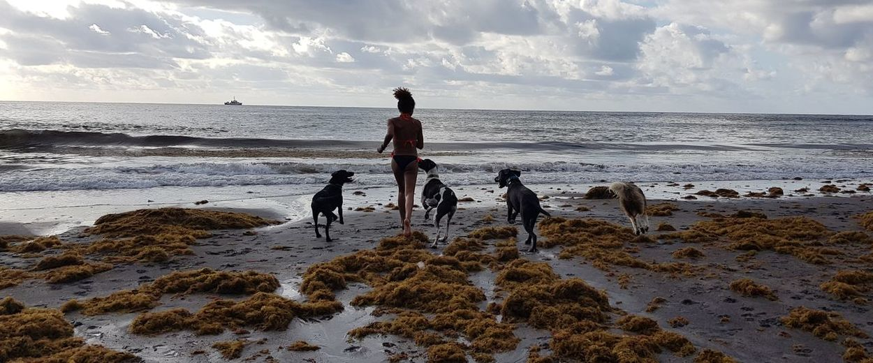Rear View Of Woman Running With Dogs On Shore At Beach Against Sky