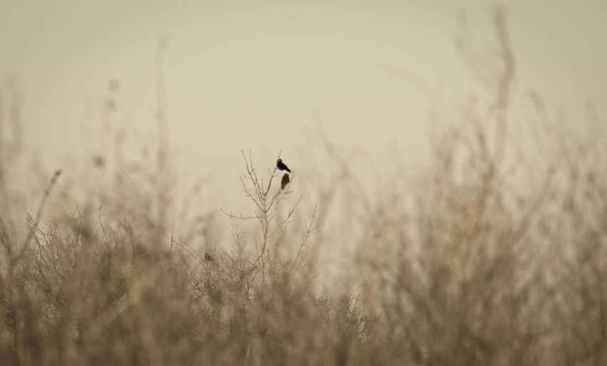 Animal Themes Animals In The Wild Beauty In Nature Bird Field Focus On Foreground Grass Landscape Nature No People Outdoors Tranquility Wildlife