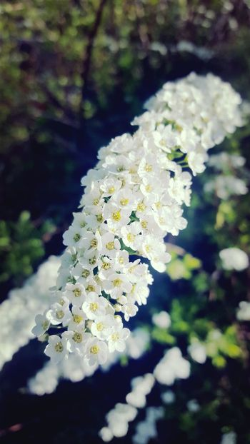 Nature Beauty In Nature Outdoors White Flower Close-up Freshness Nature