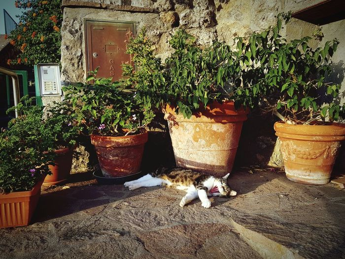 Colors Nature Capture Light Soft Bright Art Moment Naturelovers Naturephotography Peace Stay Sunlight Potted Plant Architecture Plant Cat Domestic Animals Stray Animal Mammal Feline Kitten Pets Domestic Cat