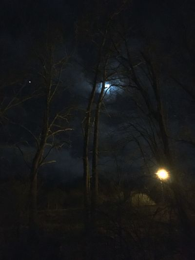 Night Illuminated No People Nature Lighting Equipment Sky Black Color Beauty In Nature Dark Outdoors Tranquility Electricity  Tree Light - Natural Phenomenon Street Moon Fuel And Power Generation Light Bulb Space Plant