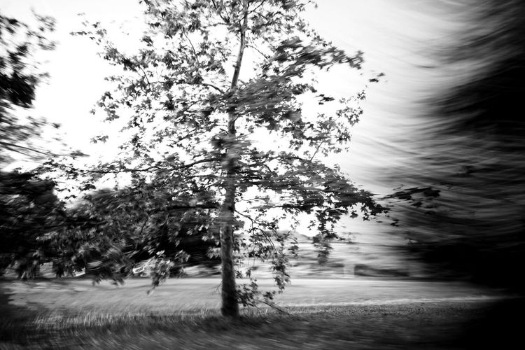 Wind. Motion. Movement. Blackandwhite Emotion Landscape Tree Outdoors Stormy Weather Movement Life In Motion EyeEm Best Shots - Black + White Capturing Movement
