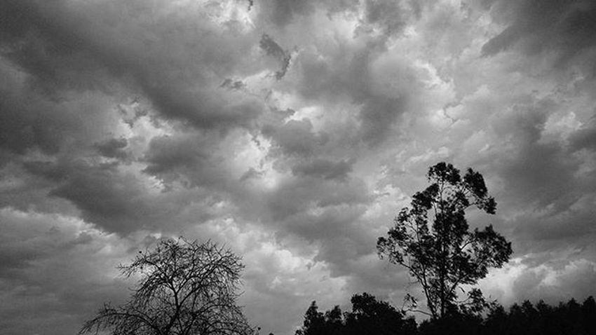 A lot to say... Photography Trees Clouds Deforestation Passion Past Previous India Creditcrez Z3_plus A_lot_of_vintage Bigstorm
