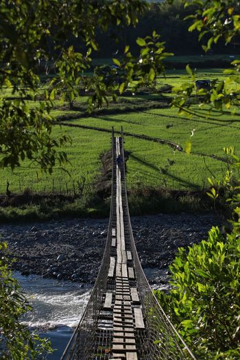 Framing the bridge and paddy field. Plant Growth Nature Water Green Color Day Tree No People High Angle View Sunlight Outdoors Beauty In Nature Field Scenics - Nature Land Tranquility Agriculture Tranquil Scene Architecture Hedge