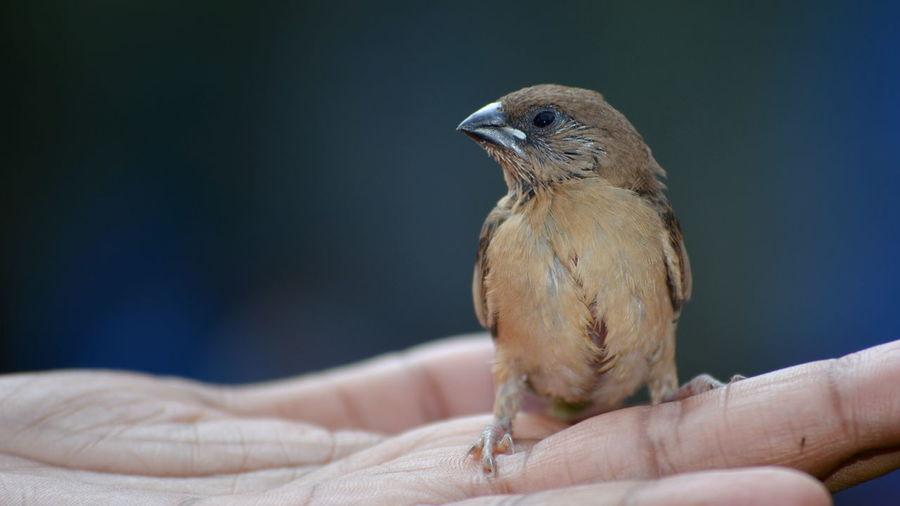 Baby Birds Bird