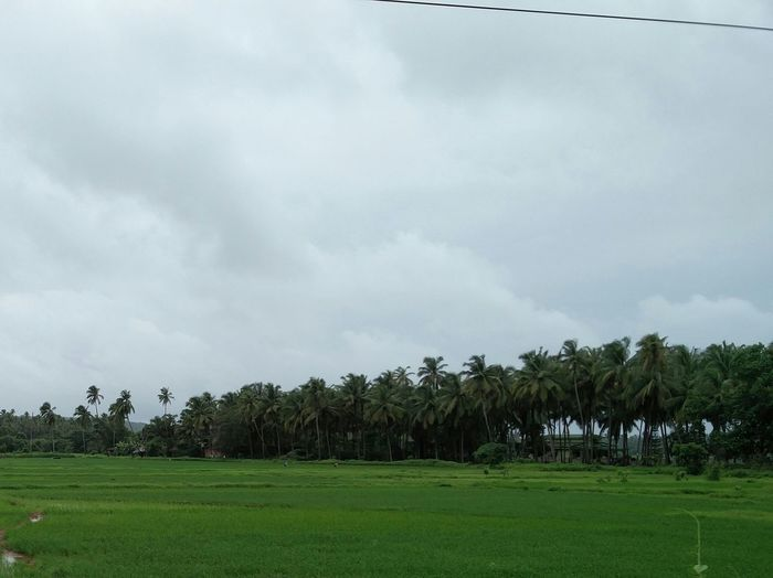 Goa No Filter, No Edit, Just Photography Nature Nature_collection Nature Photography Greenery Scenics Scenery Scenery Shots Wallpaper Trees Cloudy Sky Rainy Days Amazing Nature Beauty In Nature Beautiful View Awesome Weather Monsoon Lush - Description Atmospheric Mood Grass Area Overcast Rainy Season