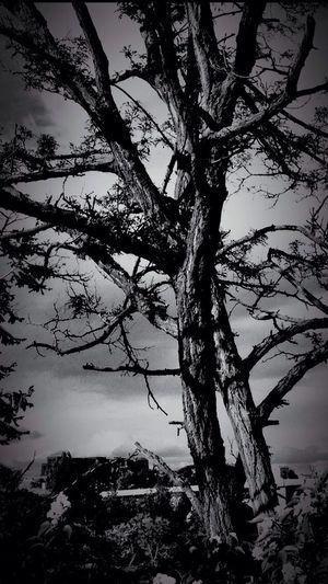 Sky And Trees Eye Em Nature Lover Hugging A Tree EyeEm Bnw
