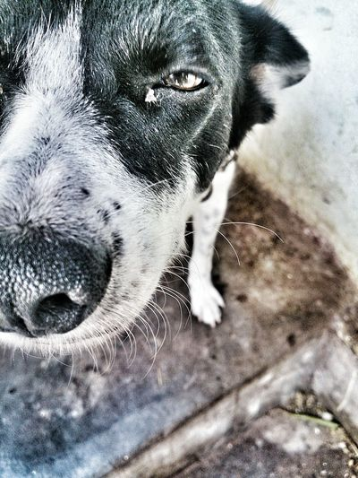 Black & White Eye Em Travel Doglovers Mobile Photography Eye Em Best Shots by sony xperia zr.......