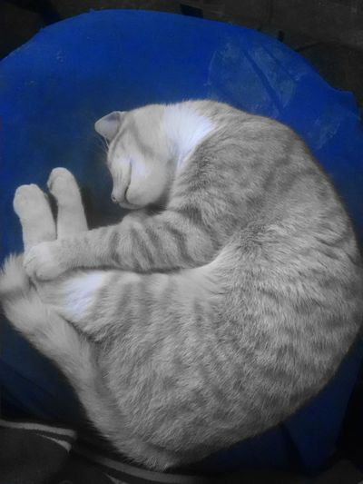 Cats Dreaming Cat Lovers