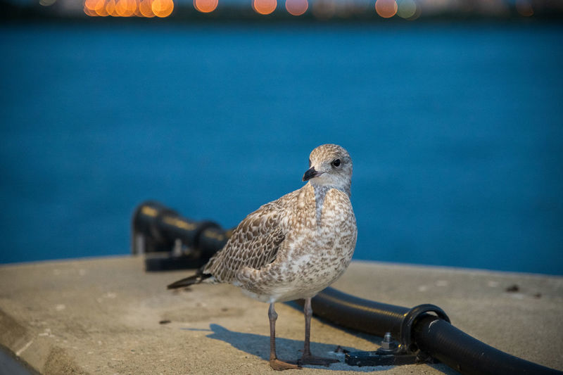Close-up of seagull perching on railing against sea