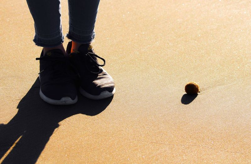 Low section of person standing by sea urchin on sand