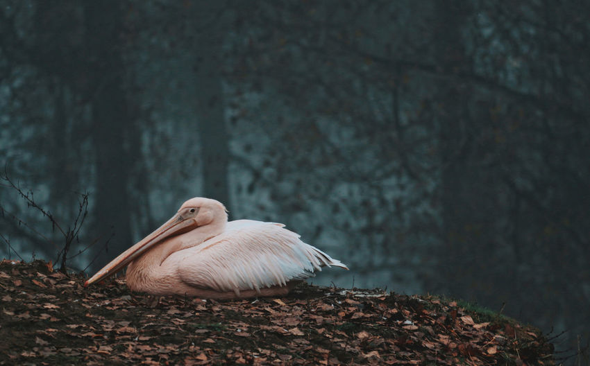 Bird Animal Themes Animal Animal Wildlife Animals In The Wild Beauty In Nature Lakeside Lake View Nature_collection Nature Photography Naturelovers Zoo Animals  Zoophotography