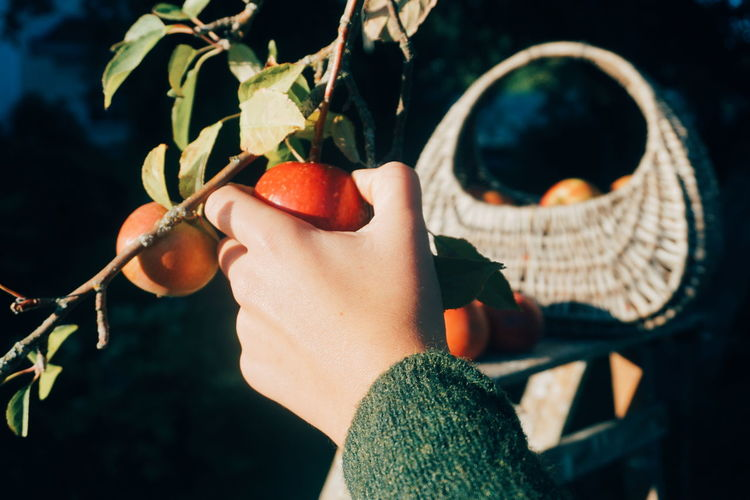 Cropped hand holding apple on tree during sunny day