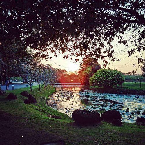 Sunset Sunflair Colombo Diyatha_uyana Wetlands Lake Planetwanderlust Passionpassport Outdoors Modernoutdoorsman Igers Ig_srilanka Wanderlust Wanderfolk Liveauthentic Livenature Travelling ExploreEverything Wanderfolk Travelgram