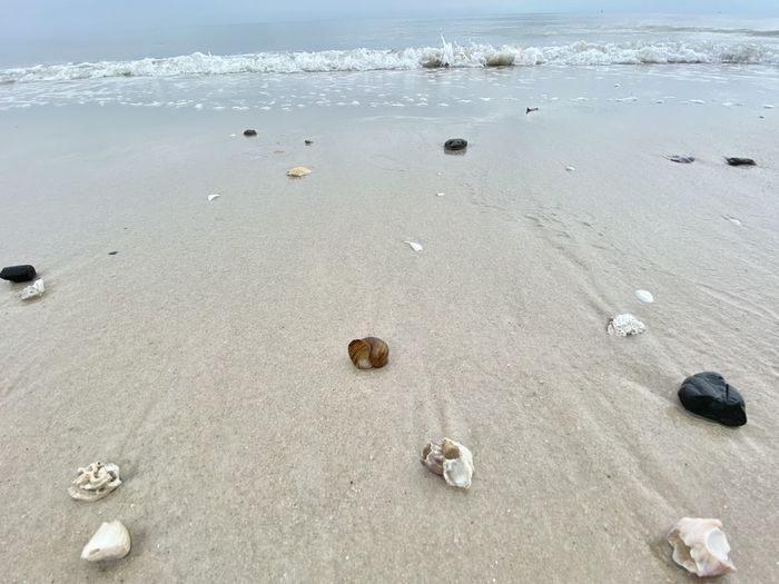 Surface level of shells on shore